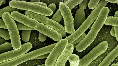 Percer les mystères du microbiote