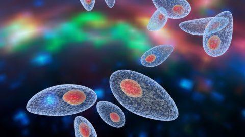 Parasite aux commandes : il nous contrôle lorsqu'on est infecté !