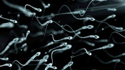 Quels points communs entre un spermatozoïde et un missile ?