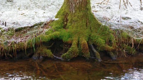 La forêt, un milieu très branché